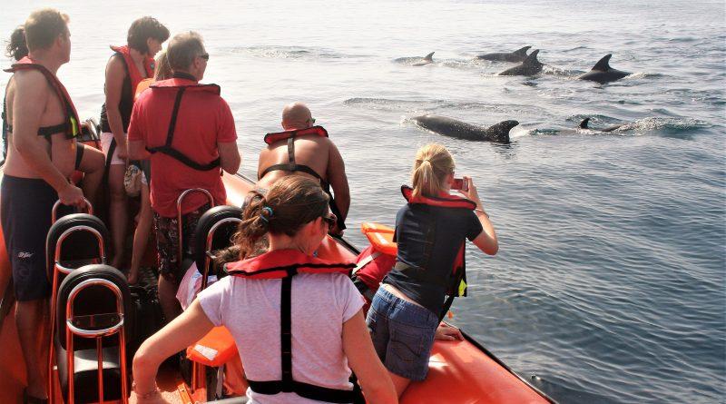 Delfine sichten bei Bootstouren an der Algarve