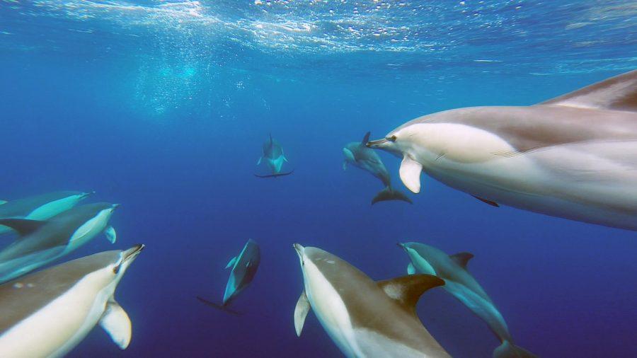 Algarve als Revier für Delfine