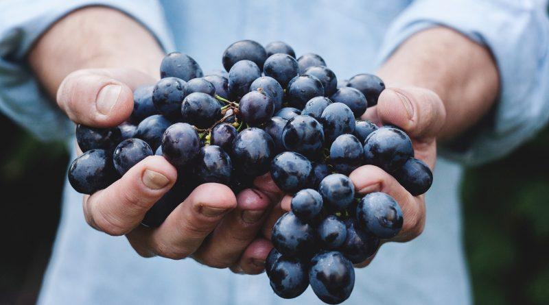 Bester Bio-Wein: Preis fürs Alentejo • Algarve für Entdecker