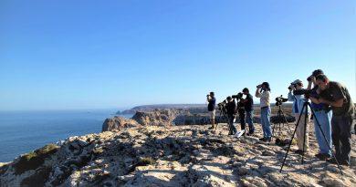 Vogelbeobachtung im Oktober an der Algarve bei Sagres