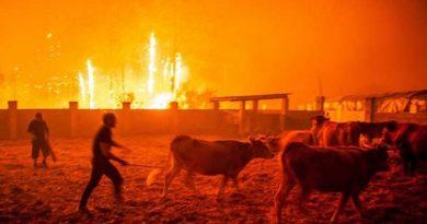 Waldbrand-Tragödie im Jahr 2017 in Portugal