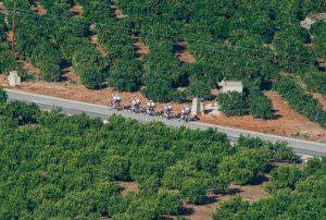 Radrennen an der Algarve: Die 44. Volta ao Algarve führt auch durch Orangenhaine