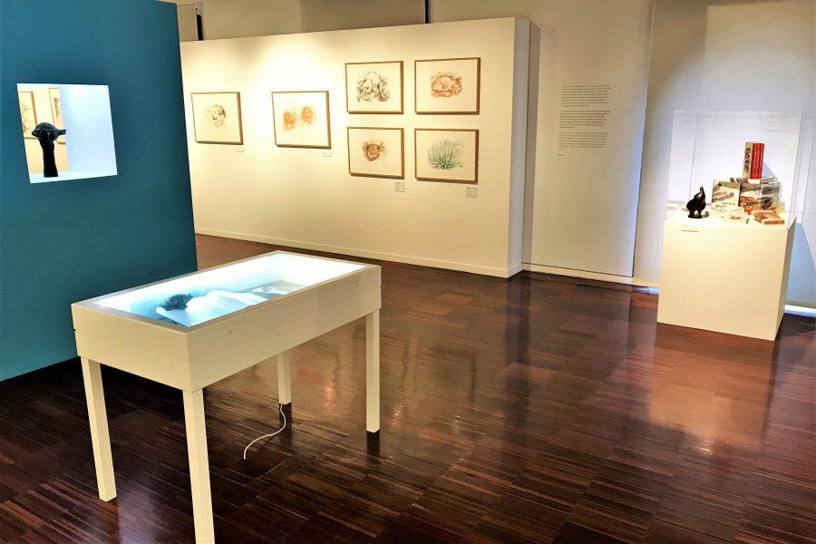 Ausstellung zu Algarve-Liebhaber Günter Grass in Portimao
