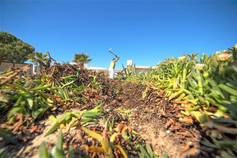 Häftlinge säubern Algarve-Strand auf der Insel Armona vor der Hafenstadt Olhao