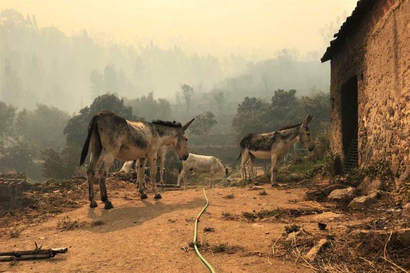 Waldbrand in Monchique trifft Eseltouren-Anbieter Robert Nestmann existenziell