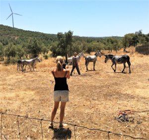Rettung für Robert Nestmann und seine fünf Esel bei Lagos an der Algarve