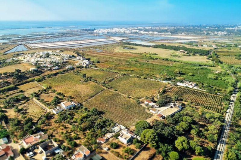 Algarve-Weine werden auf einer großen Fläche in der Nähe des Atlantiks angebaut