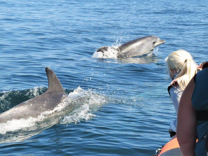 Delfine und Wale gibt es an der Algarve in zehn Arten