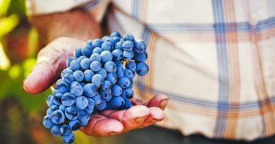 Algarve-Weine sind von südlicher Sonne verwöhnt