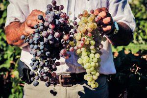 Algarve-Weine sind auch international im Kommen