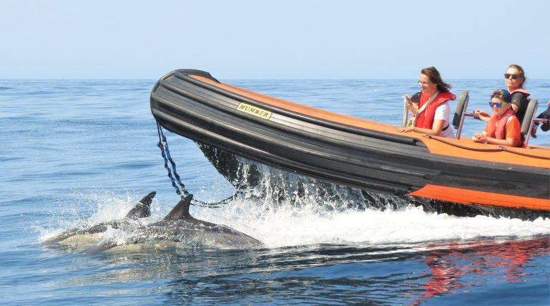 Delfine und Wale an der Algarve sind per Speedboot zu treffen
