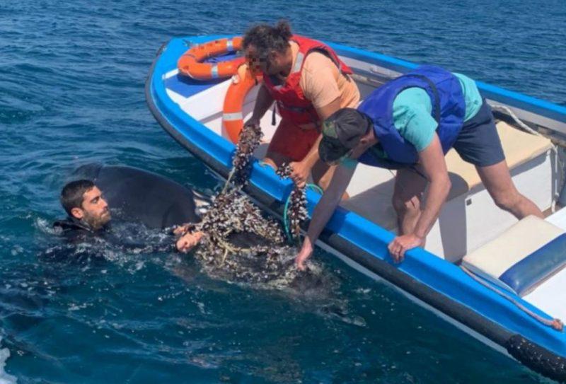 Algarve News zu Befreiung von Walen aus Fischernetz vor Lagos