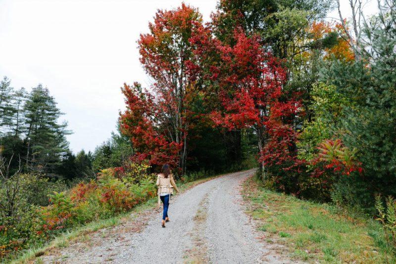 Mochique-Waldbrand soll durch Aufforstung mit Baumvielfalt beantwortet werden