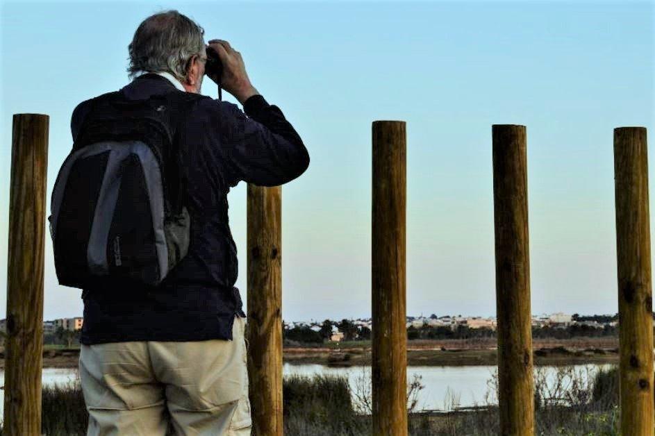 Feuchtgebiete der Algarve sind Anziehungspunkt für Vogelbeobachter