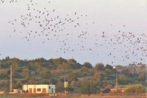 Feuchtgebiete wie Salgados an der Algarve bieten Heimat für Schwarzen Ibis