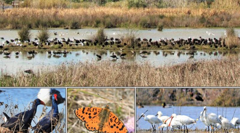 Feuchtgebiete der Algarve Thema mehrerer Almargem-Studien