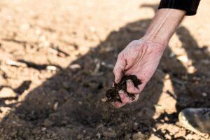 Waldbrandgefahr erhöht sich an der Algarve durch Dürre und Bodentrockenheit