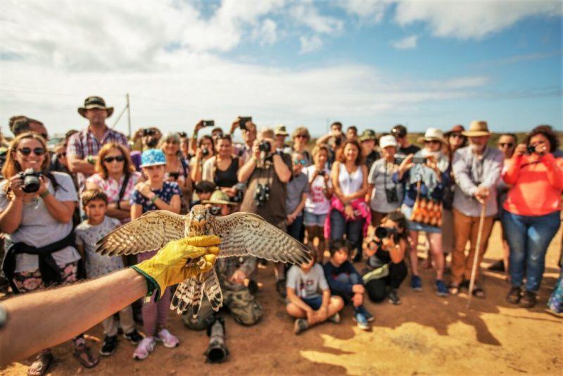 Vogelbeobachtung in Sagres mit vielen Fotografen und Naturfreunden