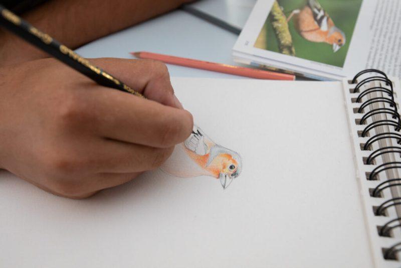 Vogelbeobachtung in Sagres mit künstlerischen Aktivitäten wie Zeichnen von Vögeln