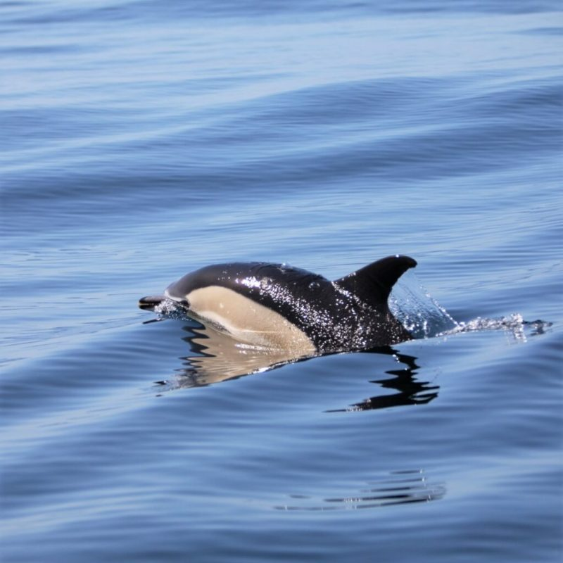 Vogelbeobachtung beim Festival in Sagres gepaart mit Delfinbeobachtung
