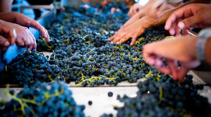 Genussreisen ins Alentejo: Weinbau mit langer Tradition